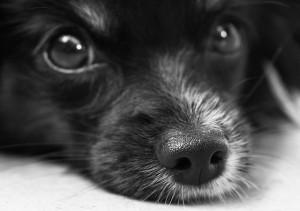 Hunde übertragen Milben